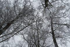 Härliga trädfilialer, Litauen Arkivbild
