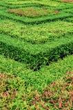 Härliga trädgårdar. Arkivbilder