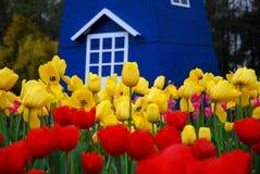 härliga trädgårds- tulpan Royaltyfri Fotografi