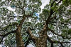härliga trees Arkivfoto