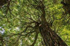 härliga trees Arkivbild