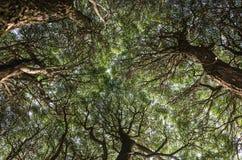 härliga trees Royaltyfri Bild