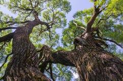 härliga trees Arkivbilder