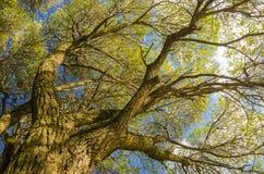 härliga trees Arkivfoton