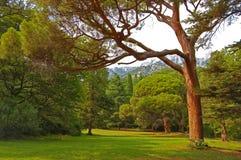 härliga trees bak sörja plattform sommarsolnedgångtrees två Arkivfoton