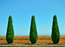 Härliga trees och blommor i Bahaien arbeta i trädgården Arkivbild