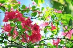 Härliga tropiska blommor utomhus royaltyfria foton