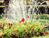 Härliga tulpan och springbrunn, naturlig plats Royaltyfri Foto