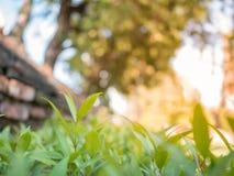 Härliga unga träd med solljus i trädgården arkivbild