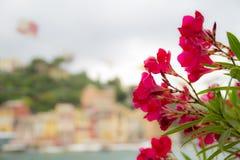 Härliga utomhus- röda blommor Arkivfoton