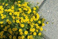 Härliga utomhus- sommarblommor för HD Arkivfoto