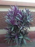 Härliga växter Arkivbild