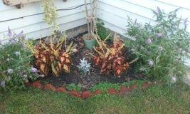 Härliga växter Royaltyfri Bild