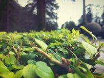 Härliga växter Arkivfoto