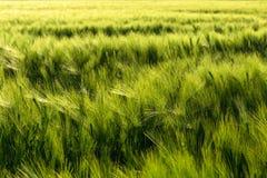 Härliga växter i ett fält arkivfoto