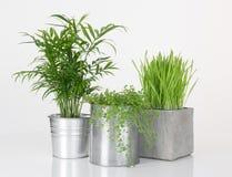 Härliga växter i metallkrukor Arkivfoton