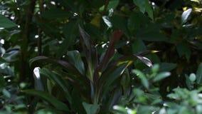 Härliga växter i trädgården stock video