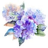 Härliga vanlig hortensiablåttblommor Arkivbild
