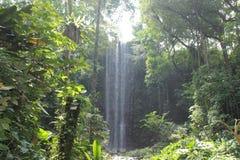 Härliga vattenfall i nationalpark i Singapore zoo Arkivbilder