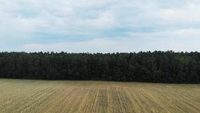 Härliga vetefält! lager videofilmer
