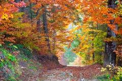 Härliga vibrerande Autumn Fall Leaves färger i skoglandskap fotografering för bildbyråer