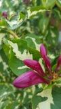 Härliga vildblommar Fotografering för Bildbyråer