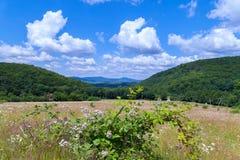 Härliga vildblommor mot bakgrunden av ett enormt fält som vänder in i massiva gröna berg Arkivbilder