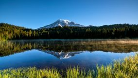 Härliga vildblommor och Mount Rainier, staten Washington royaltyfria foton