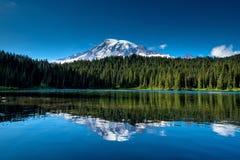 Härliga vildblommor och Mount Rainier, staten Washington arkivbild