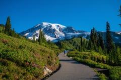 Härliga vildblommor och Mount Rainier, staten Washington arkivfoto