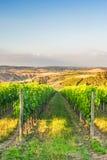 Härliga vingårdar på kullarna av den fridsamma Tuscanyen, Italien Royaltyfria Bilder