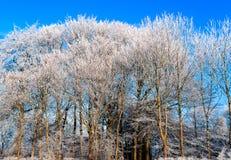 Härliga vinterträd arkivbild