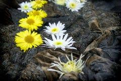 Härliga vit- och gulingblommor arkivfoton