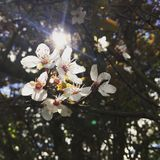 Härliga vita blommor med solen som skiner till och med träden Royaltyfria Bilder