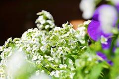 Härliga vita blommor som ses från annan, blommar Arkivfoto