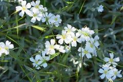 Härliga vita blommor, växer bland gräs och lövverk Arkivfoton