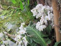 Härliga vita orkidér på en bakgrund av vatten Arkivfoton