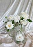 Härliga vita rosor, tappningramar och bakgrund av sammet Arkivfoton
