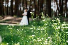 Härliga vita vildblommor i skogen med bruden och brudgummen på bakgrunden i suddighet Arkivbilder