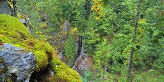 Härliga Washington Autumn Nature Scenery - Diablo Lake Area royaltyfri fotografi
