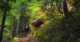 Härliga Washington Autumn Nature Scenery - gul asterButteslinga arkivbild