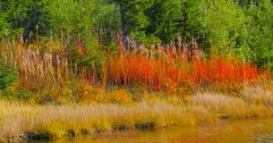 Härliga Washington Autumn Nature Scenery - norr kaskadregion arkivfoton