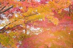 Härligt åtskilligt färgträd i höstsäsong royaltyfri foto
