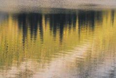 Härligt abstrakt begrepp av reflexioner av träd i jaspisen, Kanada arkivfoto