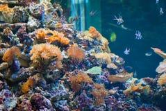 härligt akvarium fotografering för bildbyråer