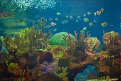 härligt akvarium arkivbild