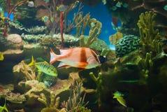 härligt akvarium arkivfoto