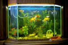 Härligt akvarium på hylla Royaltyfria Foton