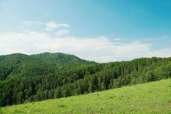 Härligt alpint landskap med gröna skogsbevuxna kullar Royaltyfria Bilder