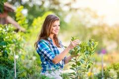 Härligt arbeta i trädgården för ung kvinna Arkivbild